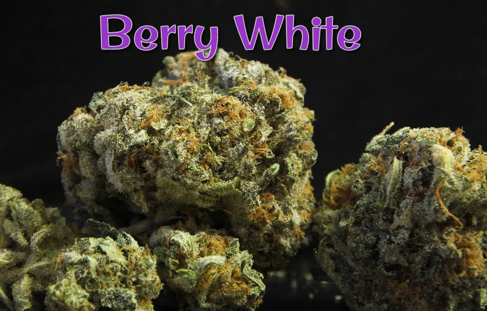 Berry White: Smells Like A Sick 3rd Grader