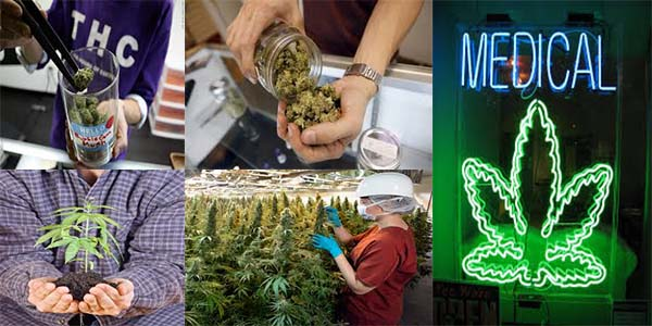 How to Get a Job with Big Cannabis