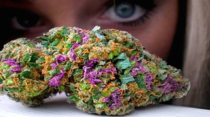 https://kushca.com/kushca-presents-the-5-best-cannabis-strains-of-2016-so-far/