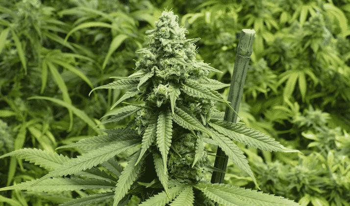 4 Cannabis Entrepreneurs Leading the Industry's Evolution