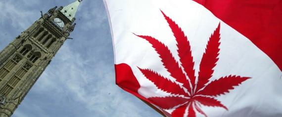 Canadian Marijuana Stocks' Trading Halted Amid Panic Buying And Selling