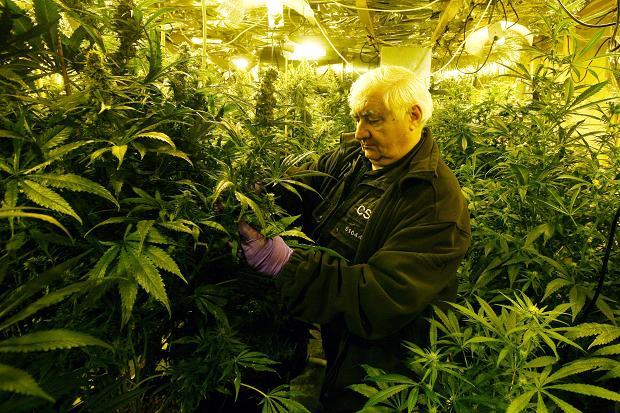 Alameda County lays groundwork for marijuana farms