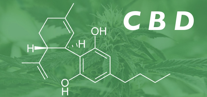 CBD:THC Ratio – What Does the Ratio Mean? (Infographic)