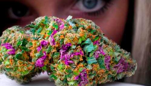KushCA Presents the 5 Best Cannabis Strains of 2016 (So Far!)