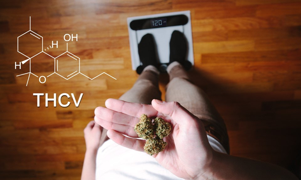 what-is-thcv-and-what-are-the-benefits-of-this-cannabinoid