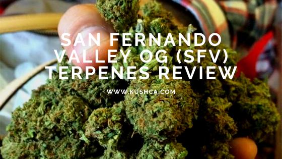 San Fernando Valley OG (SFV) Terpenes Review