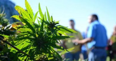 Everything You Need to Know About Hemp Farming