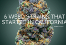 6 Weed Strains that Started in California