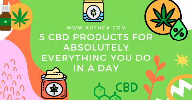 5 CBD Products for Every Day