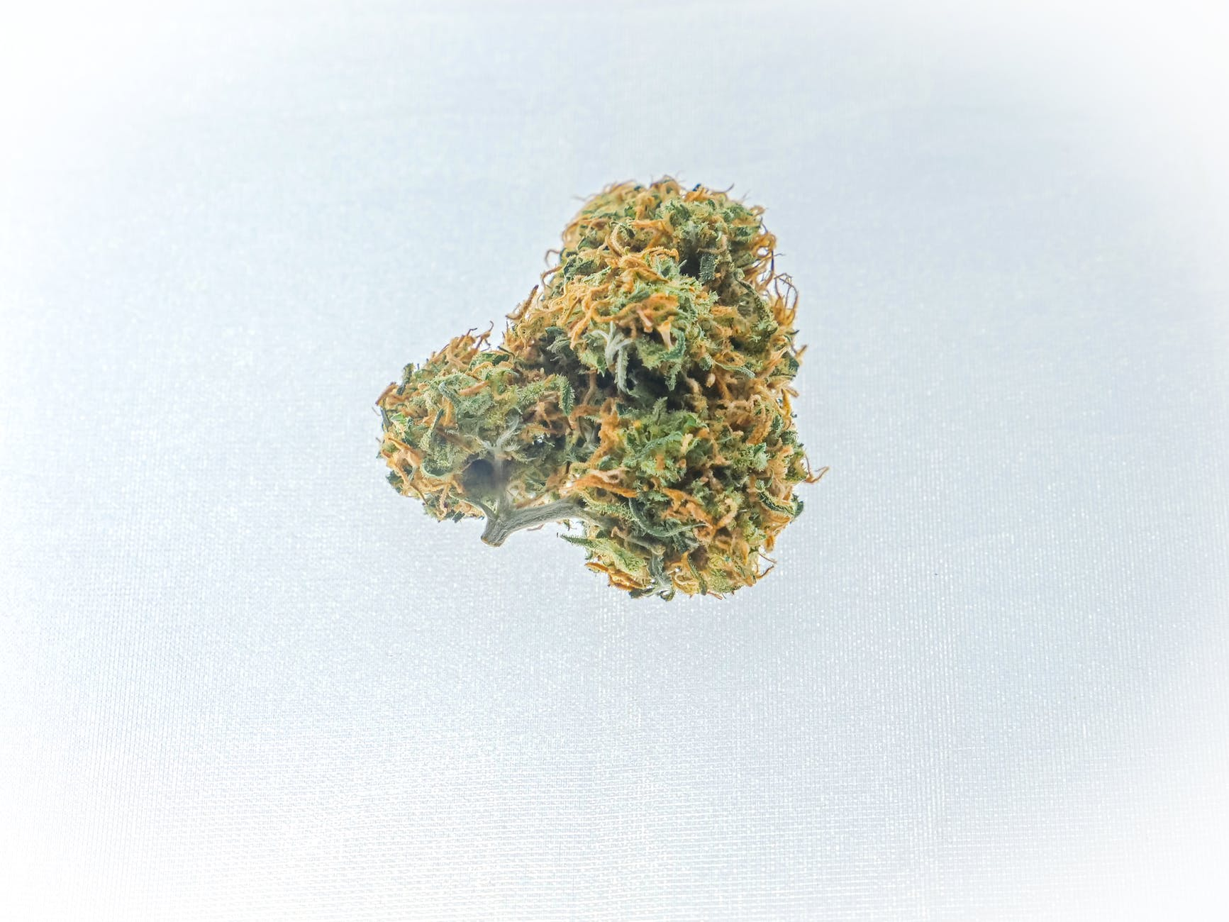 photo of skunk weed on white background